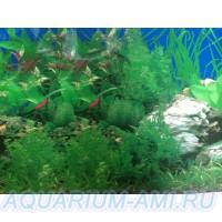 фон для аквариума 1а
