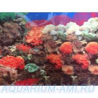 фон для аквариума 2