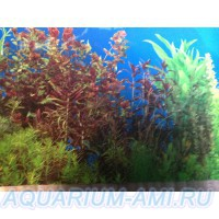 фон для аквариума 4а