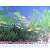 фон для аквариума 3а