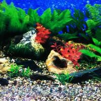 Фон для аквариума №1