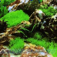 Фон для аквариума №10