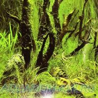 Фон для аквариума №12