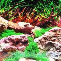 Фон для аквариума №15