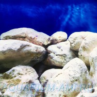 Фон для аквариума №19