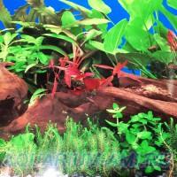 Фон для аквариума №3