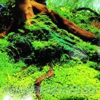 Фон для аквариума №21