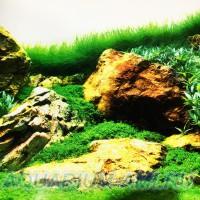 Фон для аквариума №22