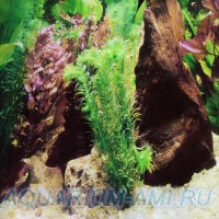 Фон для аквариума №27