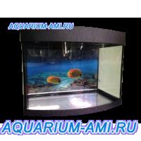 Зеленоградский аквариум панорама 80л