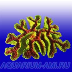 Коралл морской  Каталофиллия № 709