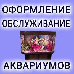 Оформлени и обслуживание аквариумов