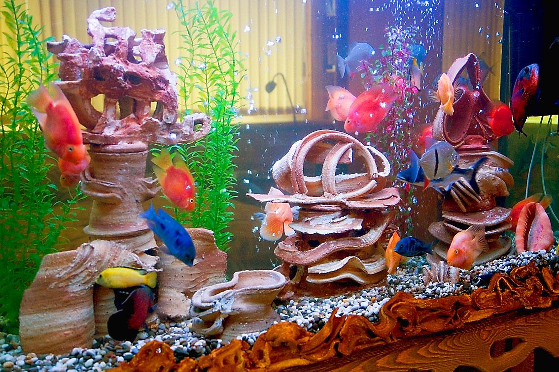 Сказочный мир аквариумов